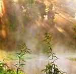 Чистое тело, чистая аура – трава чистотел